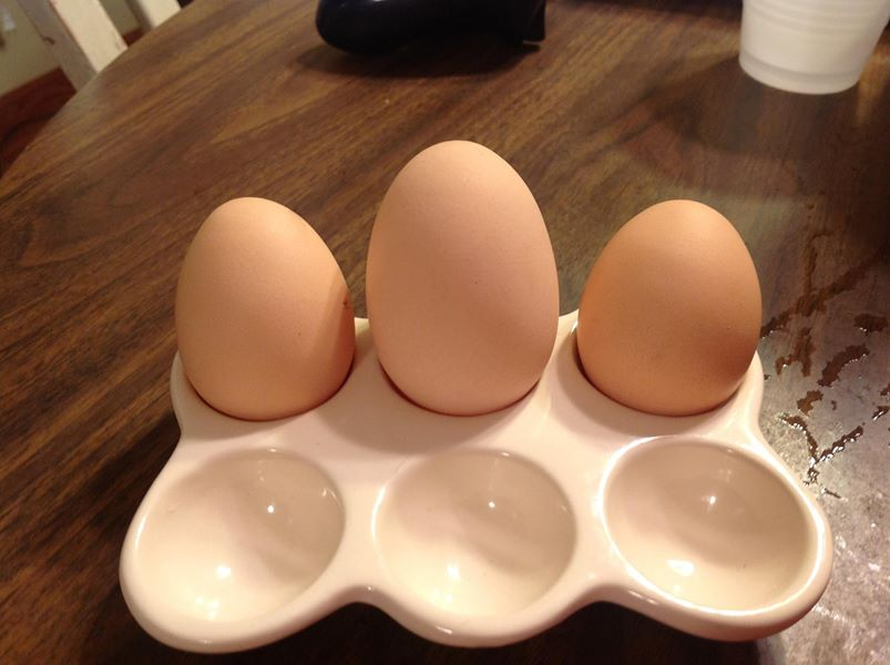 Young hens lay smaller eggs while older hens lay bigger eggs!